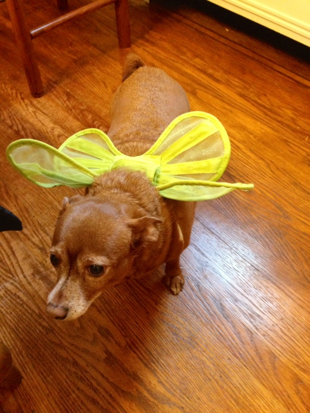 lupita the fairy dog